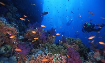 紅海11.JPG
