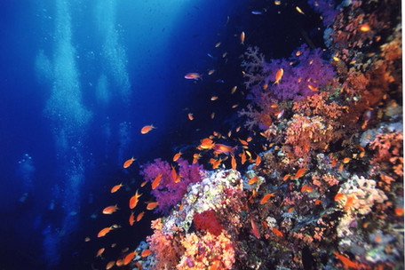 紅海5.JPG