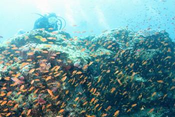 トカラ列島11.JPG