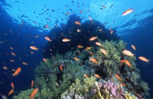 紅海9.JPG