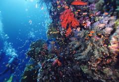 紅海6.JPG