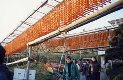 柿祭り2.JPG