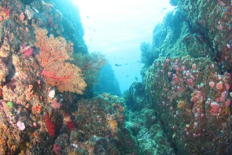 トカラ列島10.JPG