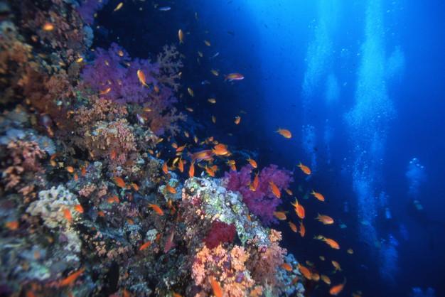 紅海12.JPG
