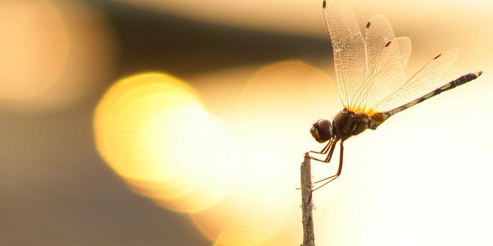 *満席*《日曜ギャラリーM&R》9月『蜻蛉』漂ふ、しじまに。