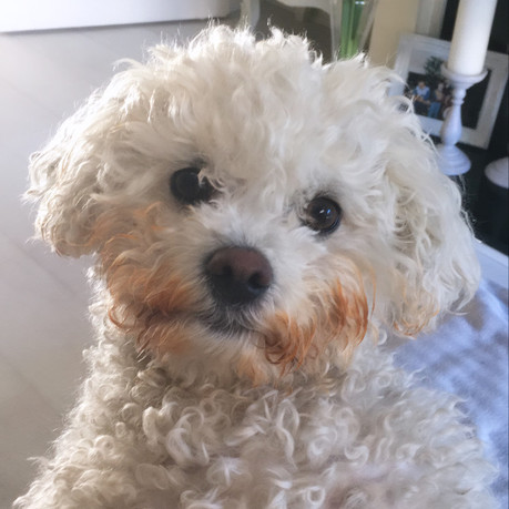 Best Groomed pandemic Pet Week 4 - Caroline O'Doherty with Pippy