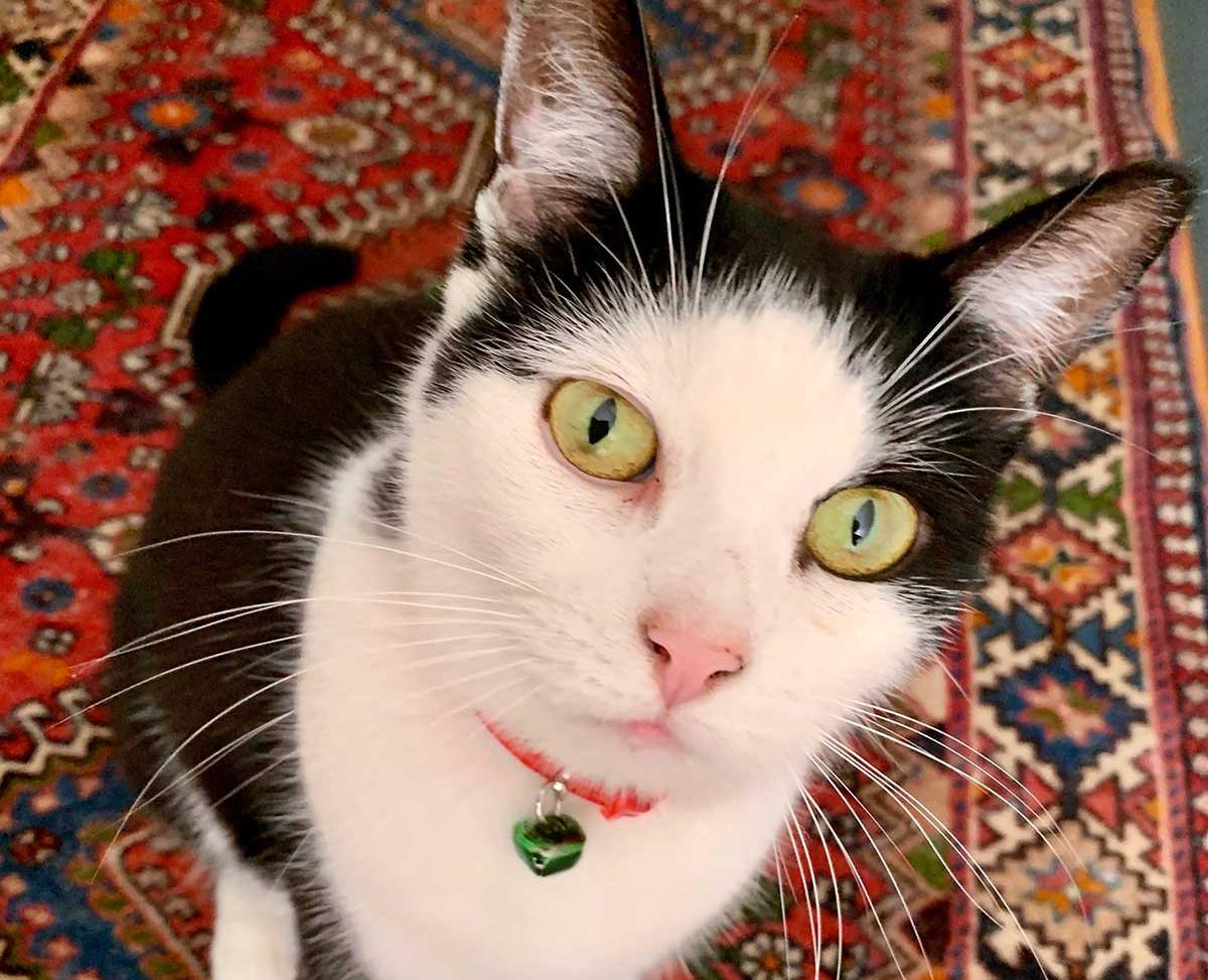 Best Covid Cat Runner Up Week 14 - Anne Hogan with Madonna