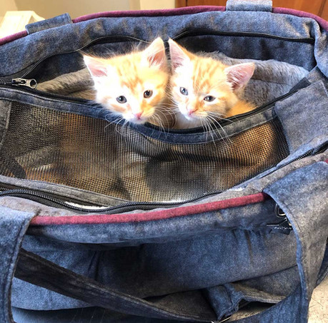 Sandymout Pet Hospital - Puppies & Kittens