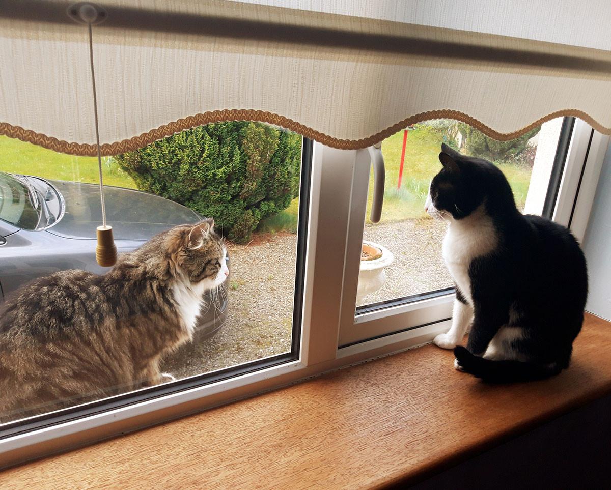 Lisa Mulvihill with Matilda: Best Covid Cat Week 2
