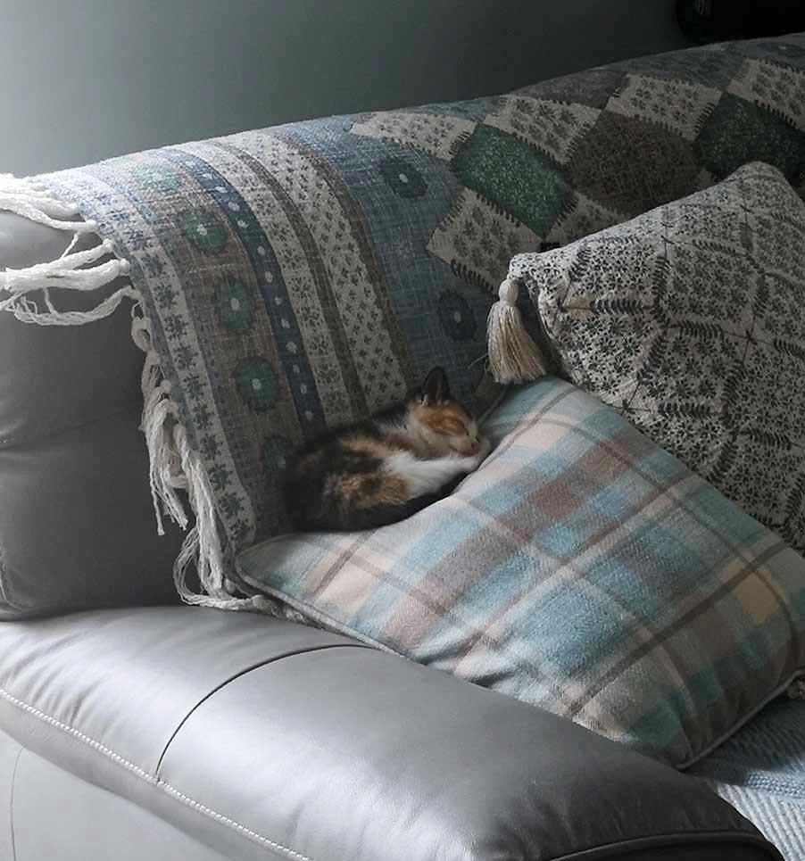 Best Covid Cat Week 9 - Helen Quinlan with Lulu
