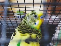 Love Bird Portrait