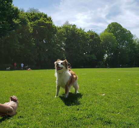 Pets Parlour Hamper Week 4 - Renata Latimer with Jack
