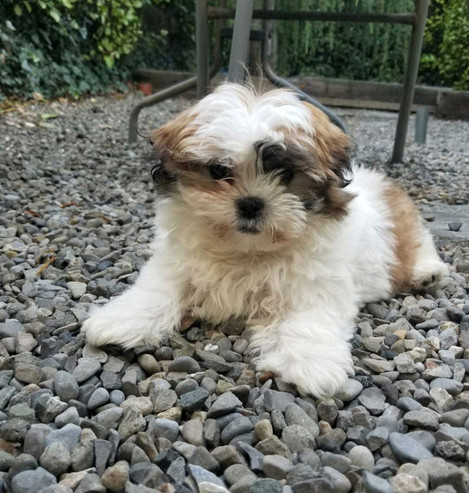 Pets Parlour Hamper Week 5 - Darko Skrobo with Coco