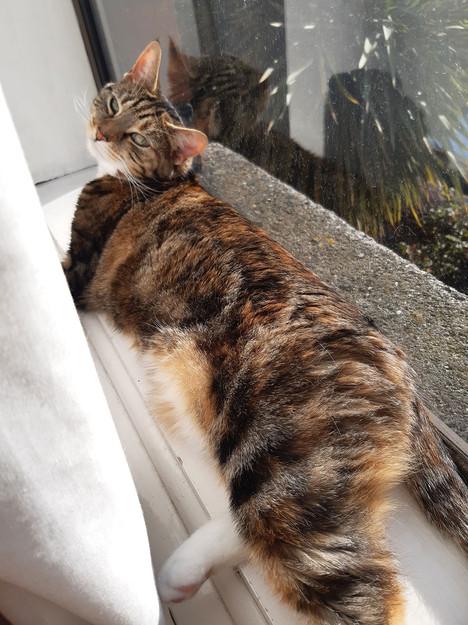 Sandymount Pet Hospital Pandemic Pet Spot Prize -Natallie Walsh with Dinky