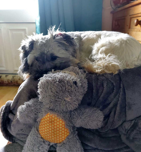 Best Pandemic Staycation Week 10 - Sandra Phelan with Star and Harvey