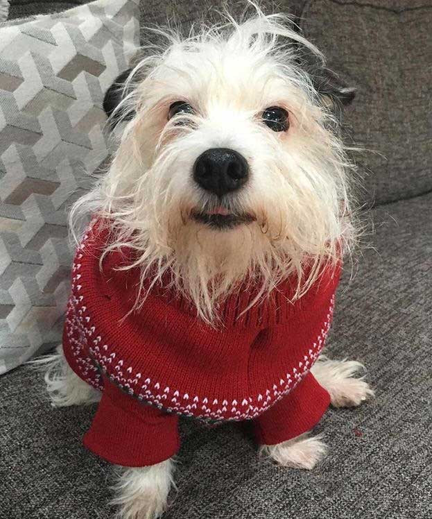 Best Pandemic Pooch Week 15 Runner Up - Niamh Healy with Pip