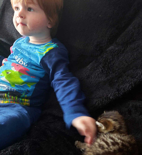 Best Covid Cat Week 11 - Áine O'Rourke andwith Hari & Lloyd
