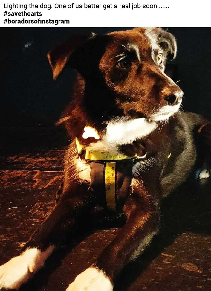 Pet Parlour Hamper Winner week 9 - Lisa Mahony with Moll