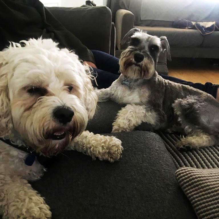 Pet Parlour Hamper Winner Week 15 - Aisling Fanning with Archie