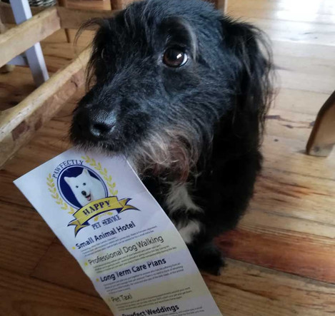 Best Pandemic Pooch Runner Up Week 7 - The Duggan Family with Towzer