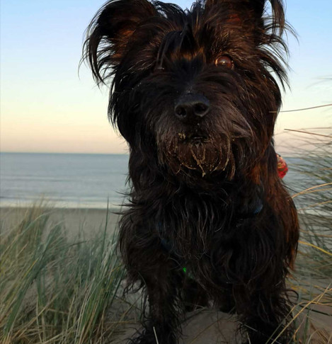 Best Pandemic Pooch Week 7 - Colette Mulready with Judy