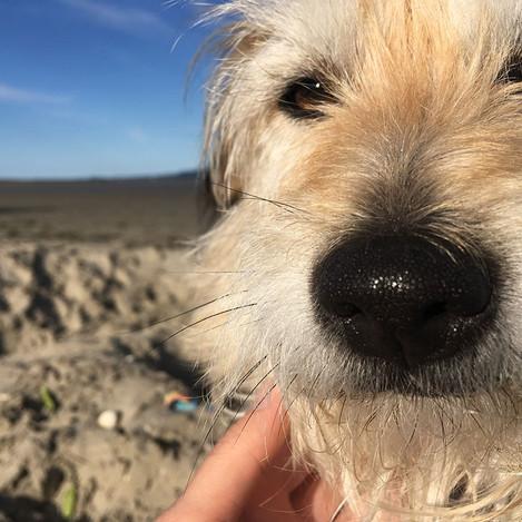 Sandymount Pet Hospital Pandemic Pet Spot Prize -Fiona Jordan with Brandy
