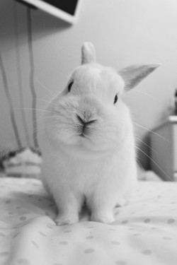 Lucy the rabbit