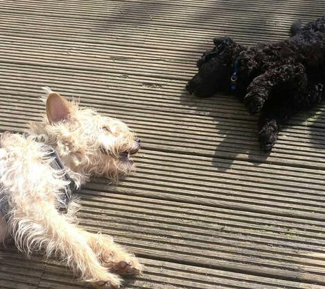 Niffler with doggy sister Phoebe.