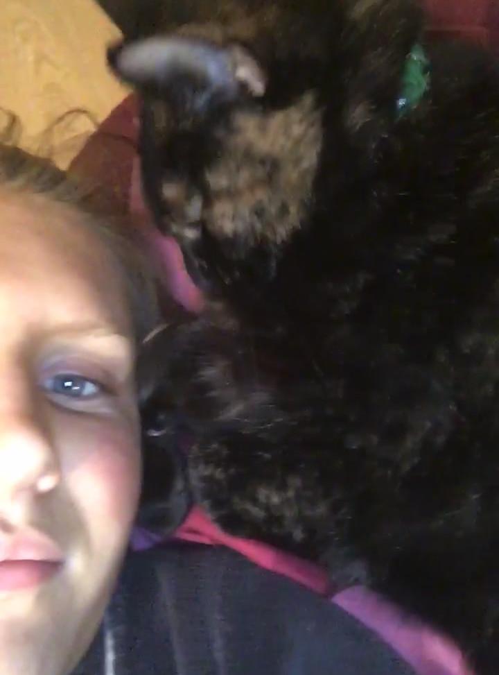 Best Covid Cat Week 15 - Eilis Keogh with Bee