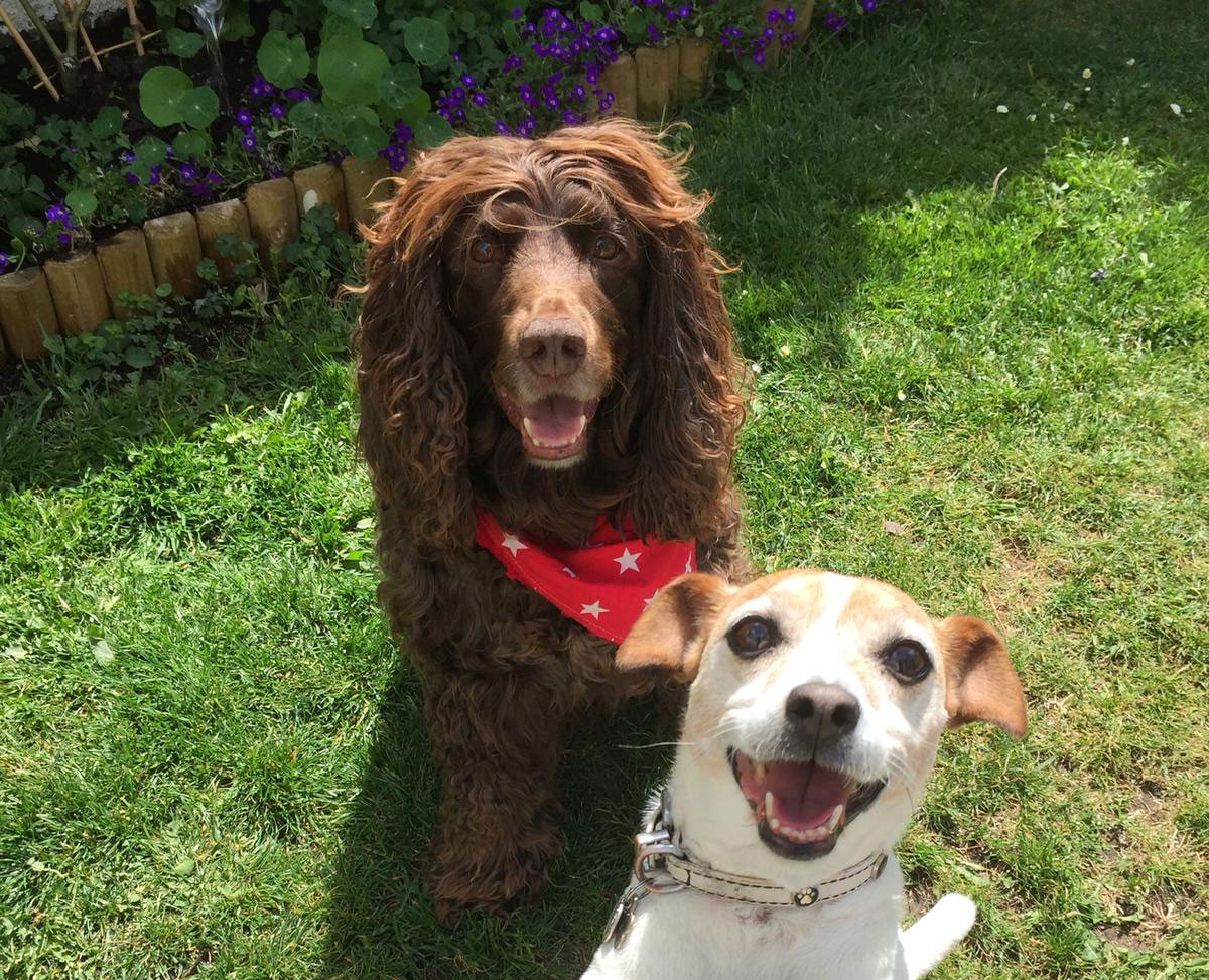 Best Pandemic Pooch Week 3: Siofra Murray with Chino