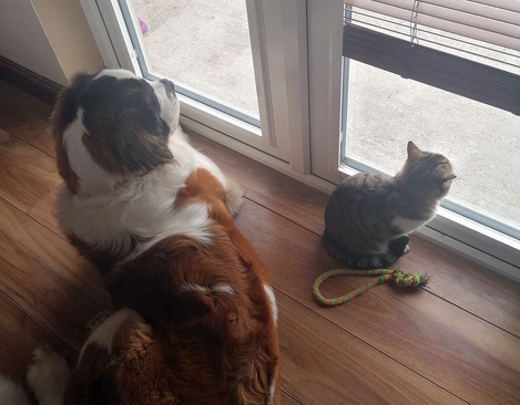 Tracy Murphy Wilson with Disney and Mittens: Best Pandemic Pooch Runner Up Week 2