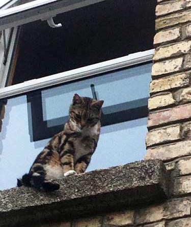Best Covid Cat Week 7 - Sean Cookewith Freddie