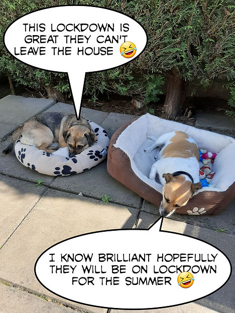 Pandemic Pets Best Creative Entry Week 7 - Joan Hughes with Bruno and Chase