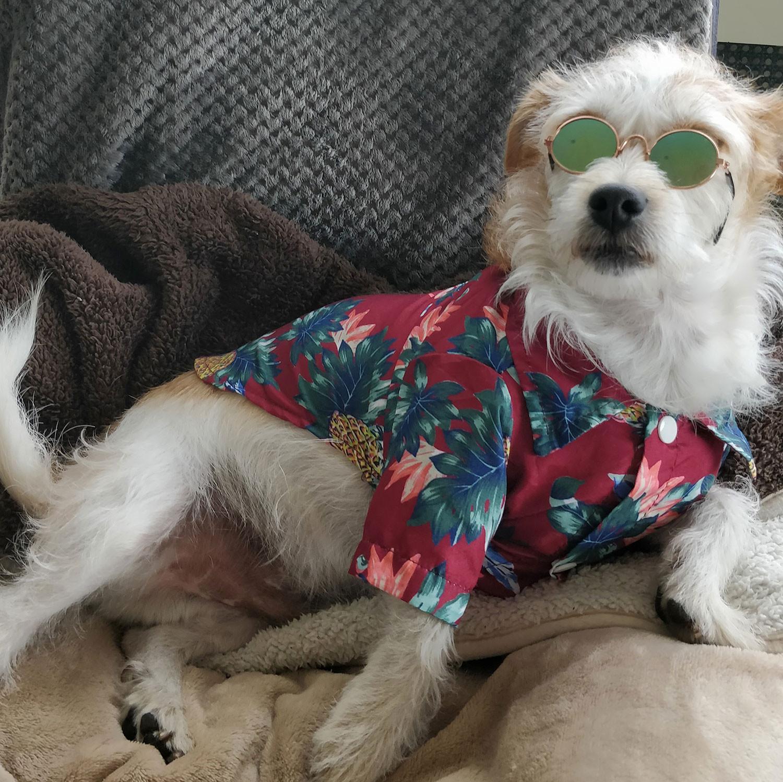 Pet Parlour Hamper Winner Week 3 - Ana Panigassie with Jerry the dog