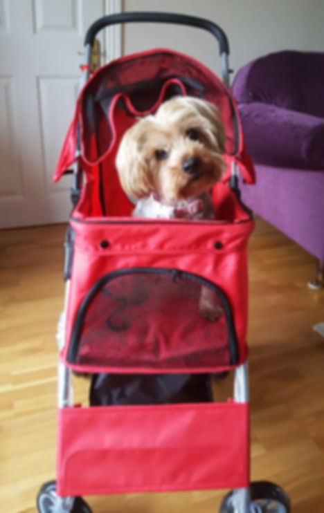 Best Pandemic Pooch Runner Up Week 8 - Claire Mellon with Dolly