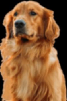 dog-05 (1).png