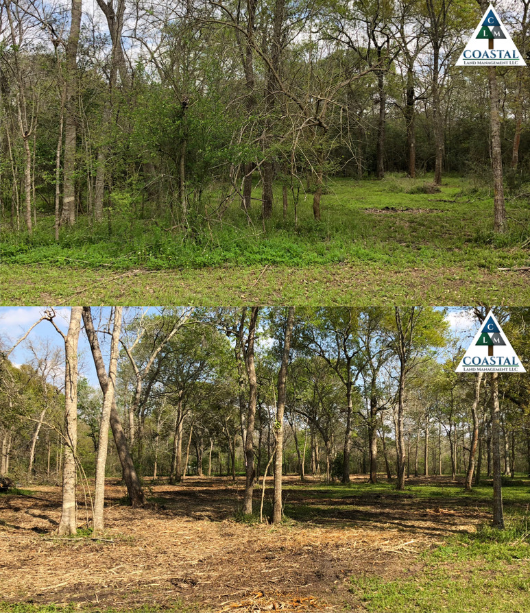 Forestry Mulching | Land Clearing | Houston, TX