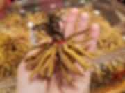 _Caterpillar fungus for sale in a high-e