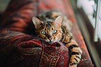 garde et visite à domicile de chat