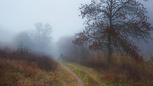 autumn-4692093_1920.jpg