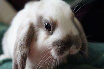 rabbit-738966_1920.jpg