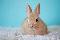 garde lapins hamster oiseaux