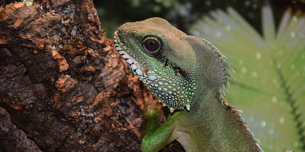 British Herpetolological Society Spring AGM