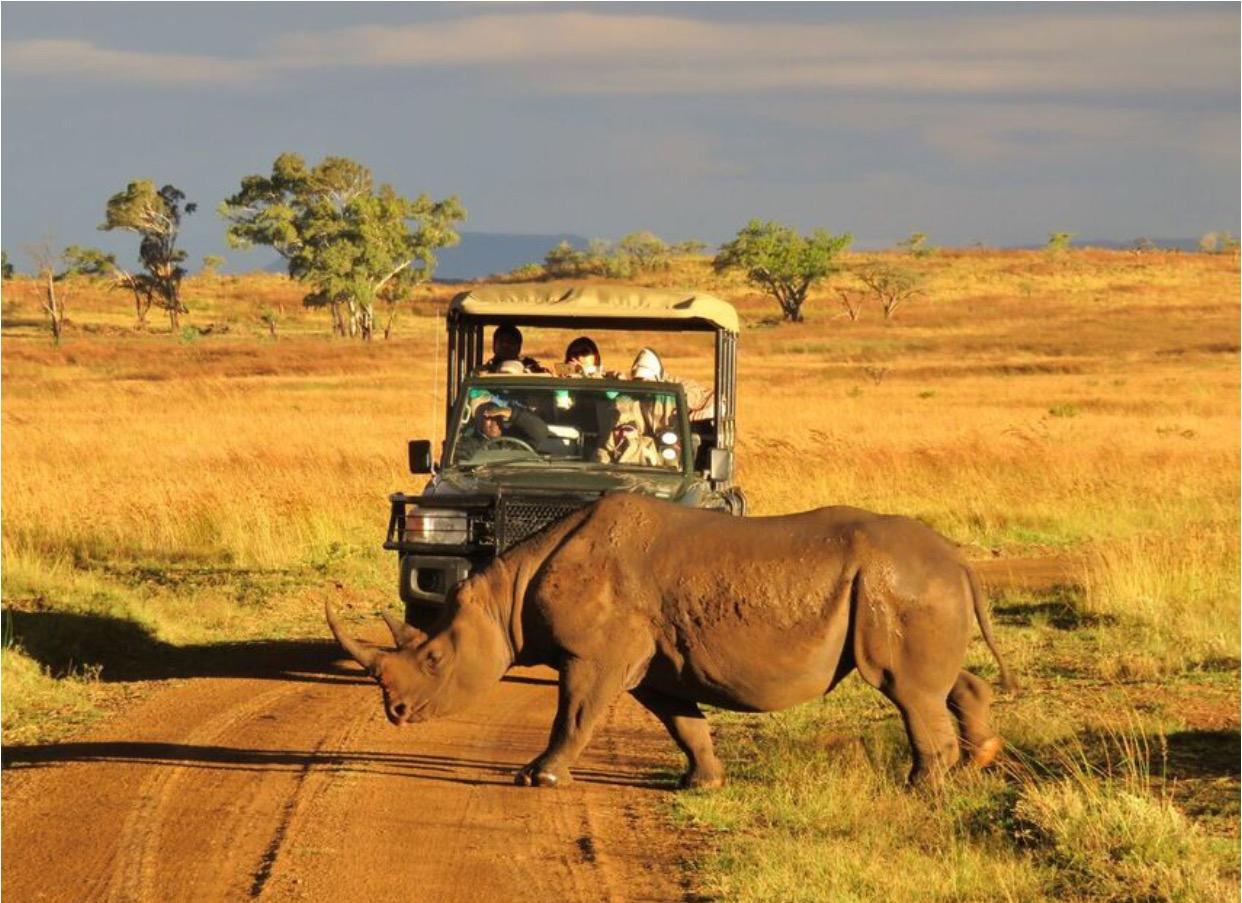Rhinocéros Nambiti Reserve