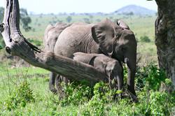 Elephant Safari Afrique du S
