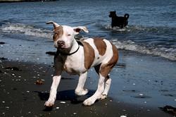 Piglit loves the Beach