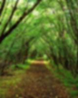 green-forest-22.jpg