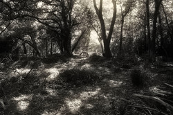 Dens in the woods2