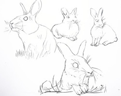 rabbit to color