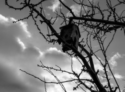 bird box-1086